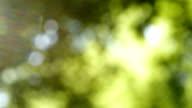 Defocused nature background. Blurred leaf forest. video