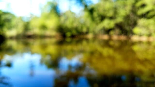 Defocused view of pond video