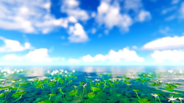 Defocused water flowers video