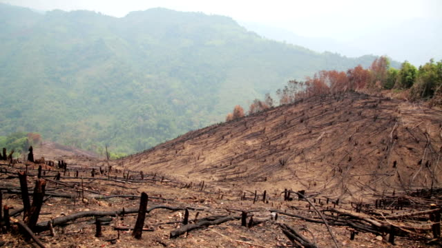 Deforestation, after forest fire, natural disaster video