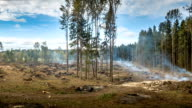 Deforestation and wildfire video