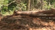 Deforestation in Amazon Rainforest video