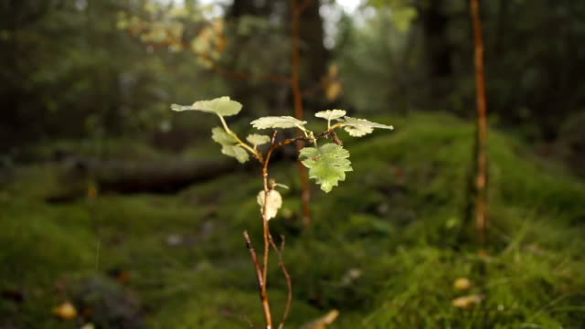 Delicate Sapling Growing In The Forest video