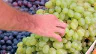 Delicious White and Black Autumn Grape video