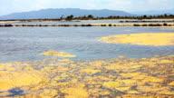 Delta del Ebro Lake, with algal mat in surface. video
