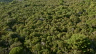 AERIAL Dense Mediterranean forest video