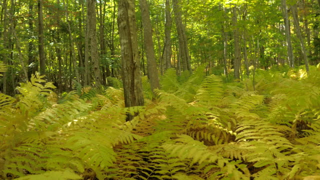 DOF: Dense vegetation covering forest floor in deciduous woodland sunny fall day video