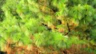 Deodar tree. Assam. India video