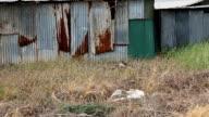 Derelict Building video