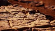 Desert background. Selective Focus video