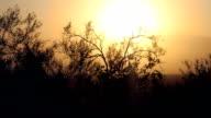 Desert Brush Silohuette against Hazy Sunset video