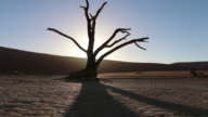 Desert -Dolly Shot at Sossuvlei- Namib Desert video