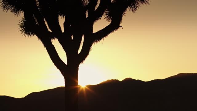 Desert Sunset video