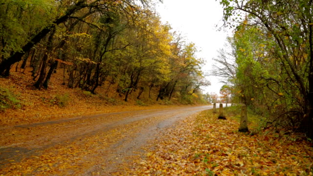 Deserted Road In Autumn Forest Covered With Yellow Leaves video