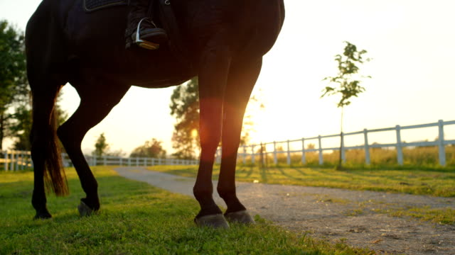 CLOSE UP: Detail of silhouetted human and horse legs standing still on the grass video