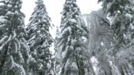 Devastation In Forest After An Ice Storm video