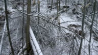 Devastation In The Forest After An Ice Storm video