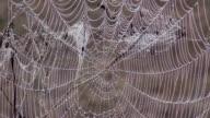 Dew covered cobweb video