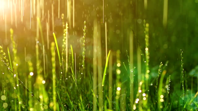 dew drops in lights on green grass. video