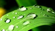 HD MACRO: Dew On A Green Leaf video