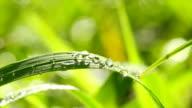 dew on green grass video