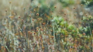 Dew on marsh stems and bokeh background video