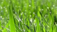 dewdrops on green grass in sunshine video