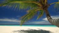 diagonal dolly beach with palmtree video