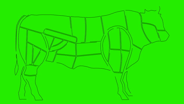 Diagrams Of Cow Body Anatomy for Cuisine Purposes on a Green Screen video