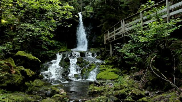 Dickson Falls. Two shots. video