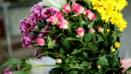 Different types and colors of fresh seasonal flowers. video
