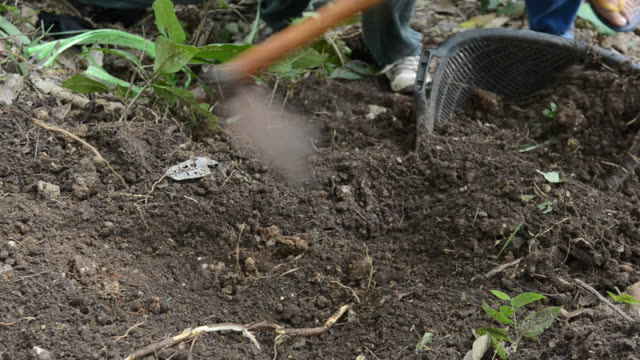 Digging in the dirt on cultivated land. video