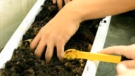 diging in small soil video