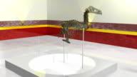 Dinosaur Skeleton video