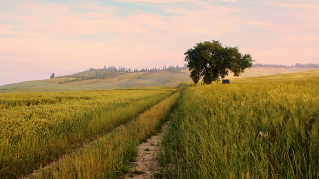 DS Dirt road among fields in Tuscany video