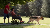 Disabled people, pets, dog sitter with alsatian dogs in park video