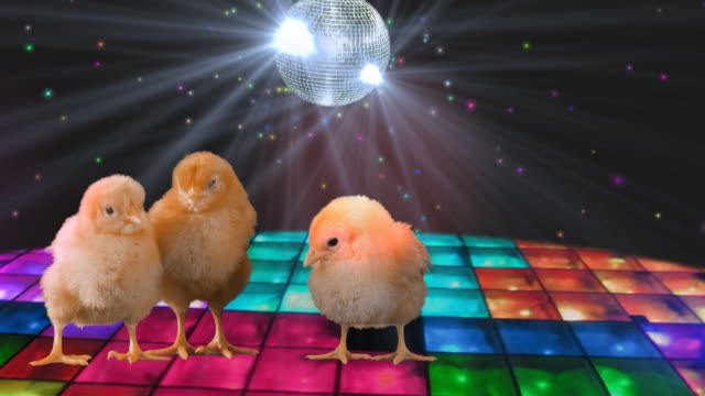 Disco chicks video