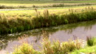 Ditch in meadow, the Netherlands video