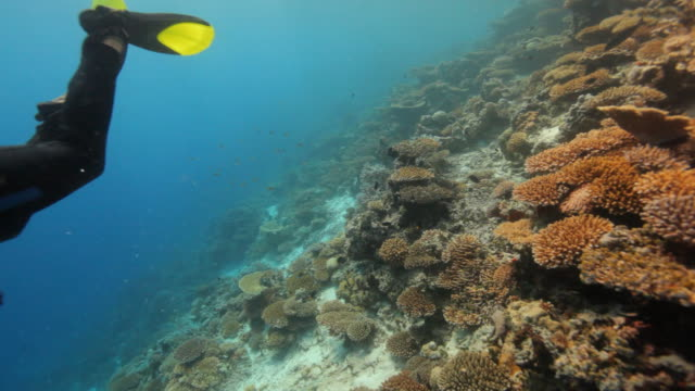 diver diving along beautiful coral reef video
