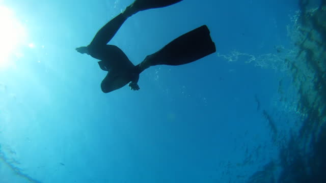 HD: Diver Swimming Back To Surface video