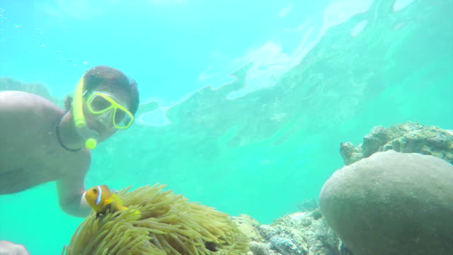 UNDERWATER: Diver swimming pass the fish hiding in coral reef video