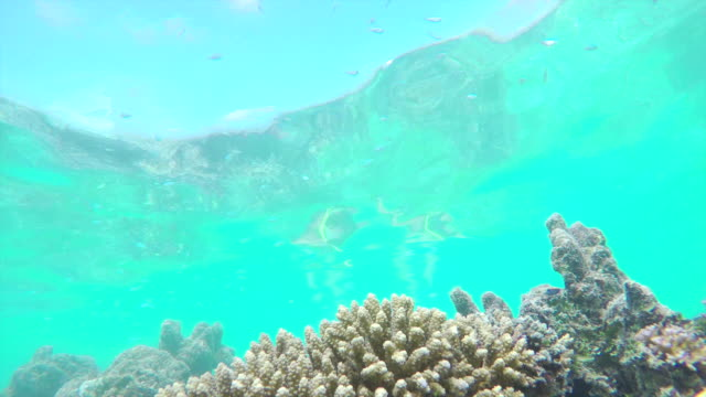 UNDERWATER: Divers swimming over colorful coral reef full of fish video