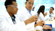 Diverse male scientists analyze liquid in test tubes video
