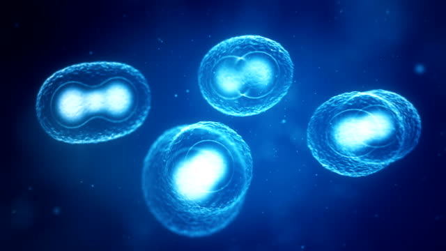 Dividing Cells video