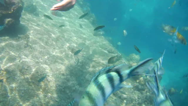 Diving in shallow reefs during the weekend. video
