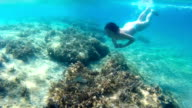 Diving in the Exotic Sea video