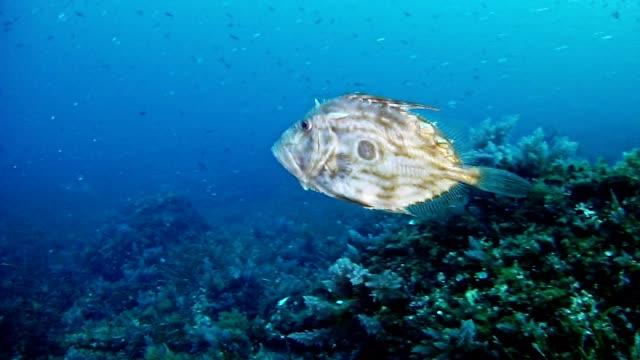 Diving in the Mediterranean Sea video