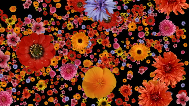 Diving into Flowers. See similar movies below. video