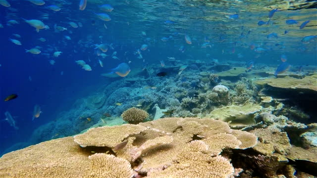 Diving ride along a tropical coral reef on Maldives video