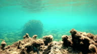 Diving sequence in the mediterranean sea video